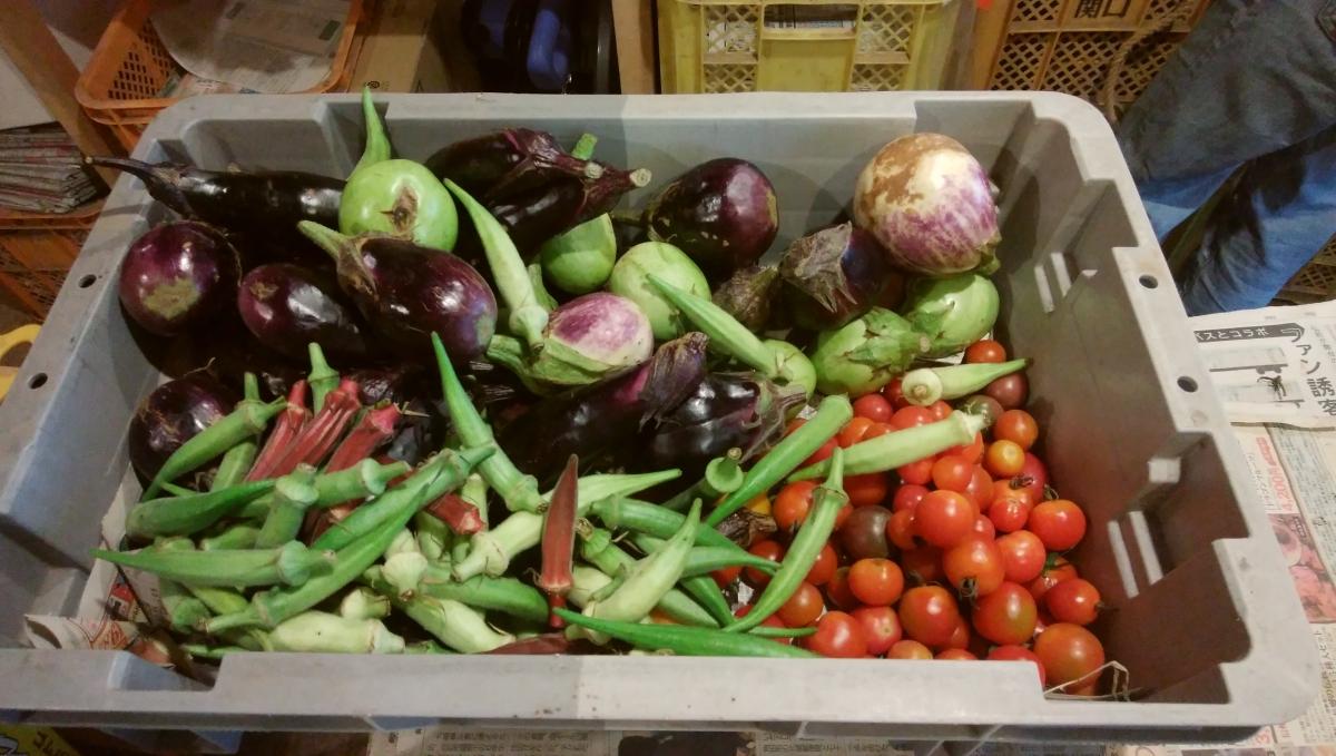 夏野菜盛り合わせ